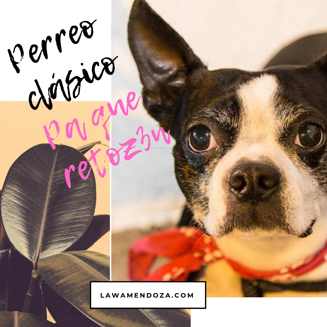 Playlist: Pa´que Retoz3n – Reggaeton Clásico sin interrupción